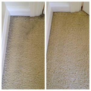 carpet with dirt accumulation at edges of room