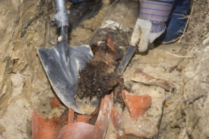 clay sewer pipe damaged by tree roots