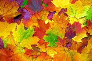photo of colorful fall leaves