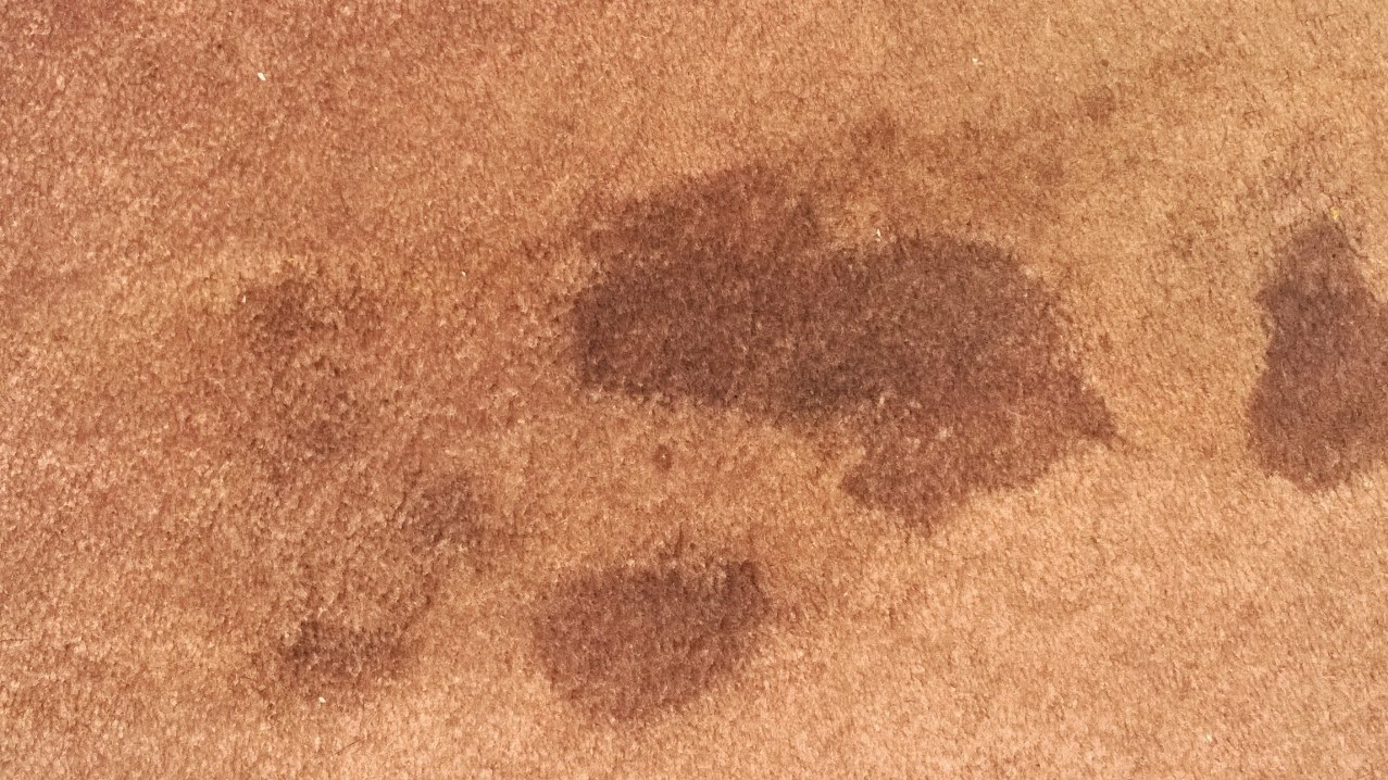 carpet wet from underneath due to slab leak