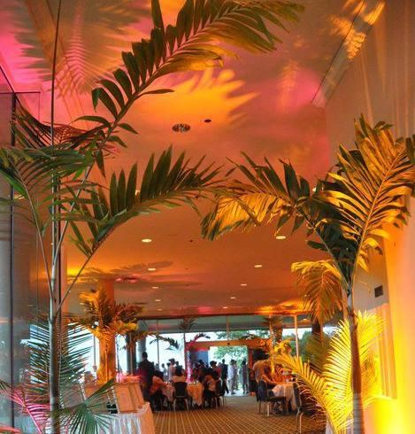 uplighting for interior plants