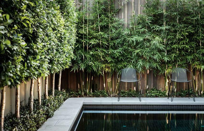 trees and bamboo improving an indoor view of the pool