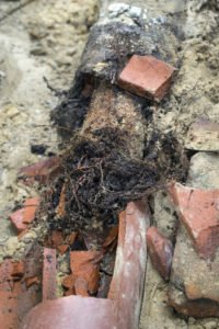 photo of tree roots destroying a sewer line